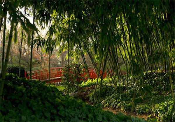 Jardins japonais du musée Albert-Kahn